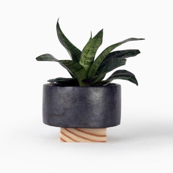 Dot Planter (Set of 2)
